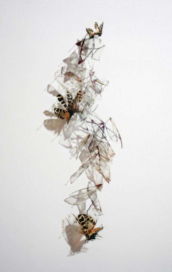 Alan Bur Johnson - Progeny Fig. 11, 2012, photographic transparencies, insect pins, 36.5 by 16.5 by 3 inches framed