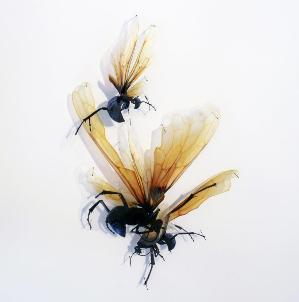 Alan Bur Johnson - Progeny Fig. 1, 2011, photographic transparencies, insect pins, 28.5 by 19 by 3 inches framed