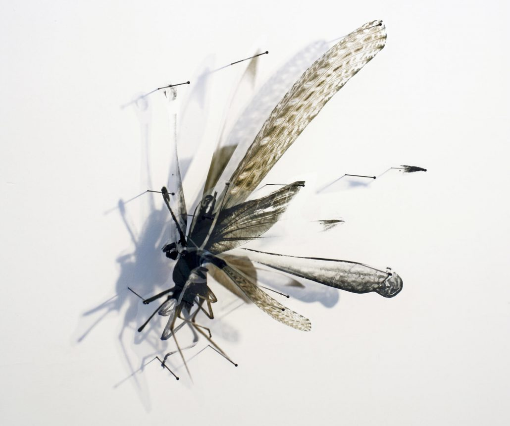 Alan Bur Johnson - Progeny Fig. 2, 2011, photographic transparencies, insect pins, 15 by 18 by 3 inches framed