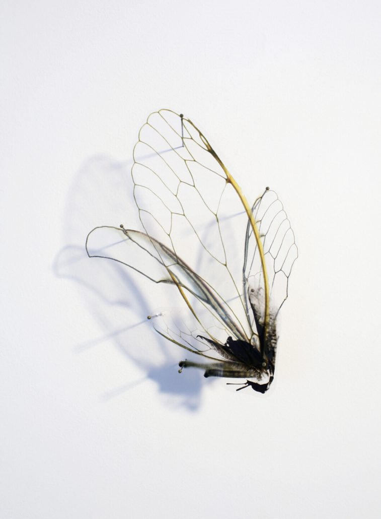 Alan Bur Johnson - Progeny Fig. 6, 2011 photographic transparencies, insect pins, 25.75 by 12.25 by 3 inches framed