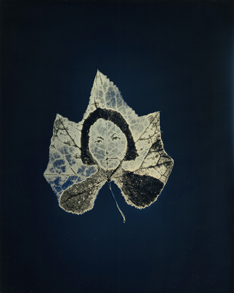 """Binh Danh - Untitled #12, from the series, """"Aura of Botanical Specimen"""", 2018, photogram on daguerreotype, 10 by 8 inches / 14.75 by 12.5 inches framed, unique"""