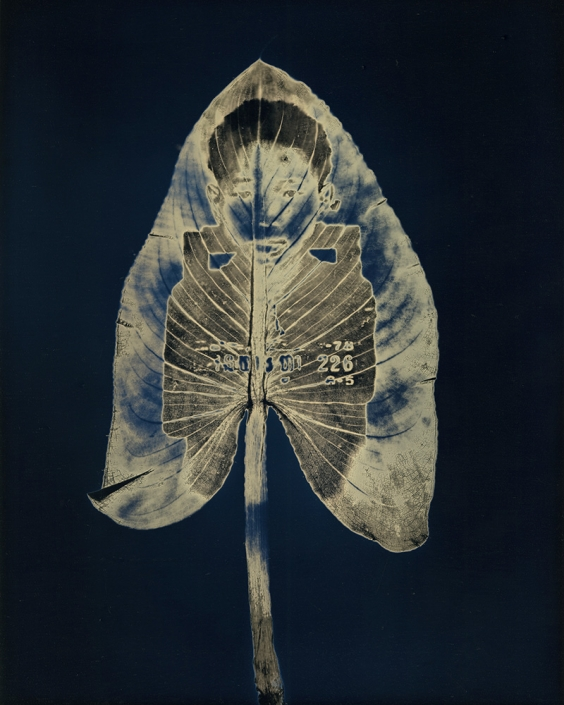 """Untitled #13, from the series, """"Aura of Botanical Specimen"""