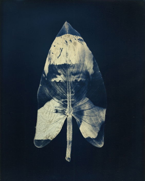 """Untitled #14, from the series, """"Aura of Botanical Specimen"""""""
