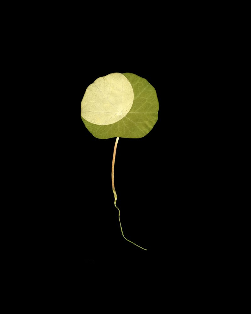 Binh Danh - Found Eclipse #2, from the Searching for the Cosmos series, 2005, chlorophyll print, resin, 10 by 8 inches