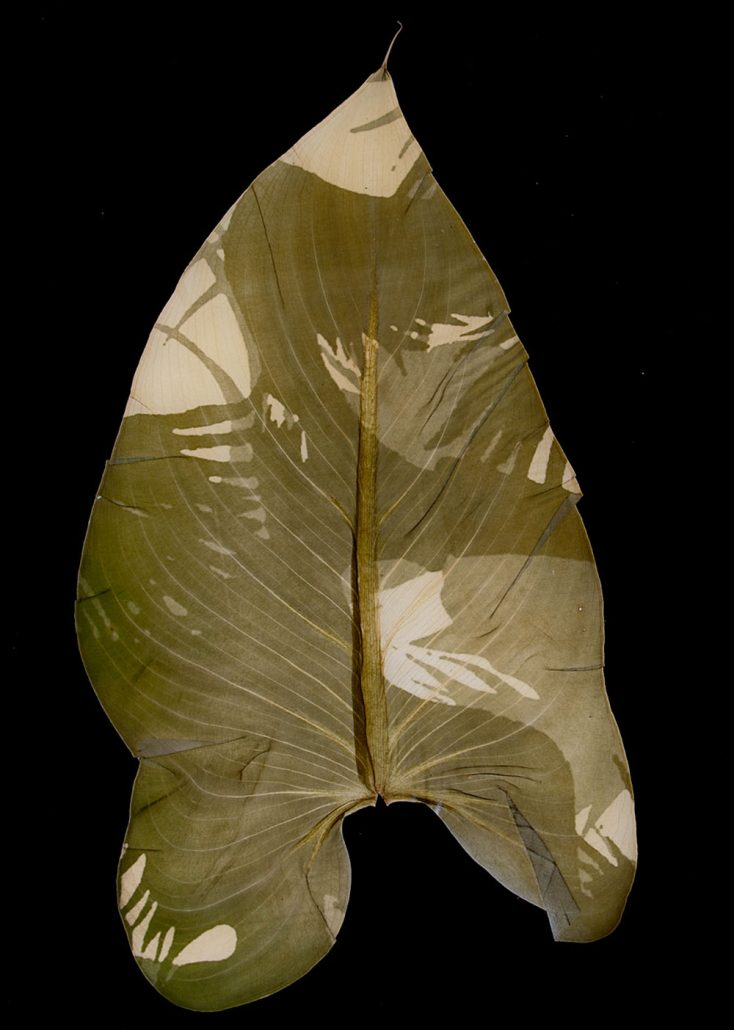 Binh Danh - Military Foliage #19, 2010, chlorophyll print, resin, 16.5 by 10.5 inches