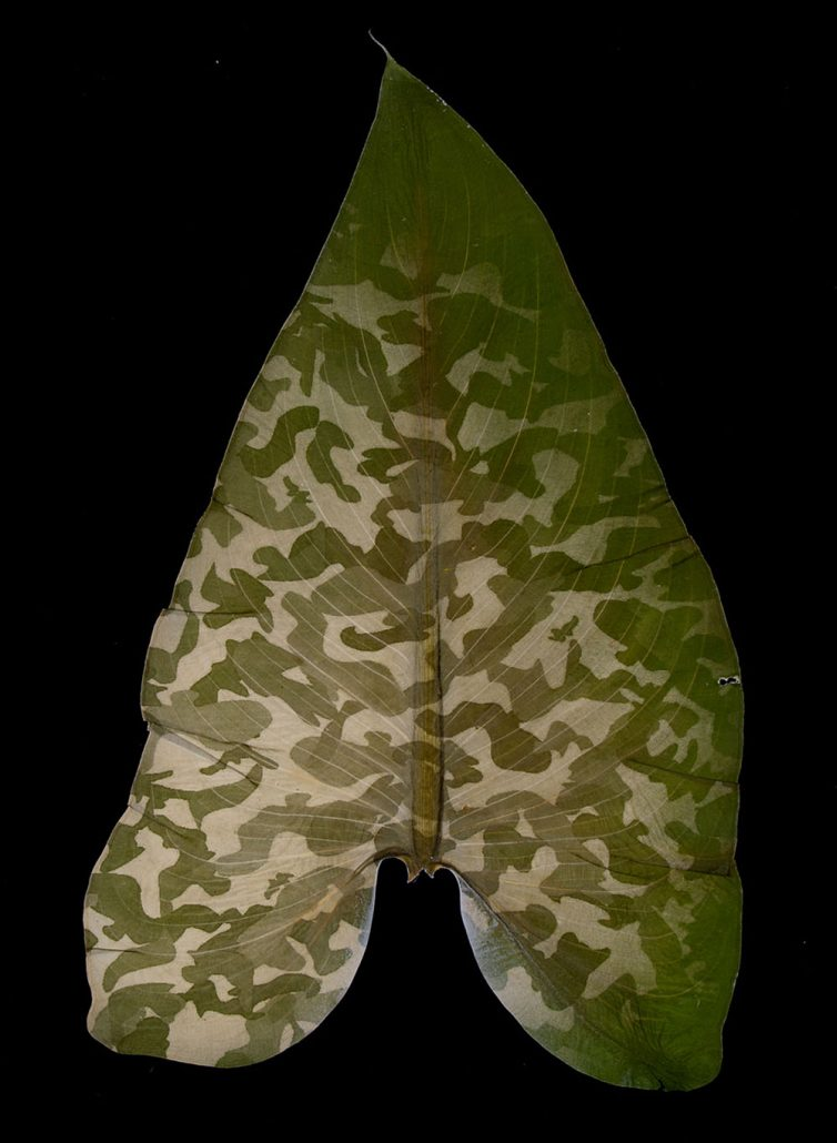 Binh Danh - Military Foliage #43, 2010, chlorophyll print, resin, 13 by 9.5 inches framed