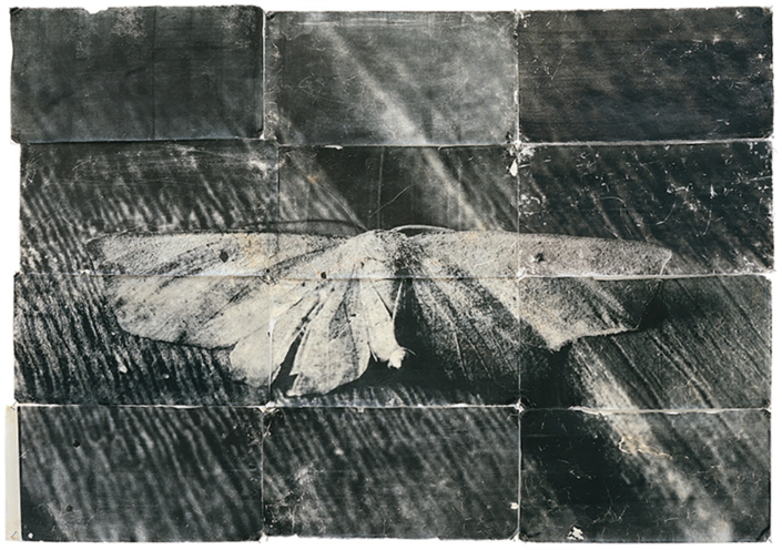 Mike & Doug Starn - Attracted to Light 13, 1996-2003, toned silver print on Thai mulberry paper, edition of 5, 42 by 60 inches / 48 by 66 inches framed