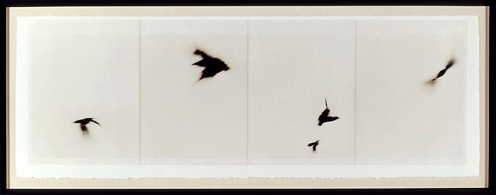 Marie Navarre - sound of this dream, 2004, film, paper, thread, 22 by 64 inches