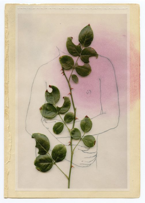 Marie Navarre - Tender bloom, 2013, found and de-acidified paper, digital print on vellum with graphite drawing on reverse, pastel, silk thread, rag paper, 9.5 by 7 inches