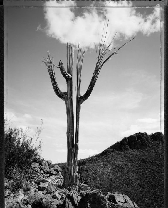 Mark Klett - Desert Citizen No. DC-08, 1989-90, gelatin silver print, 20 by 16 inches