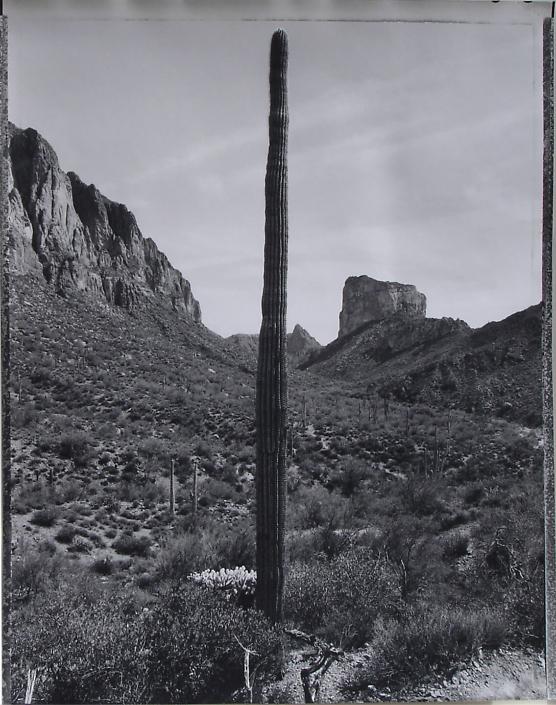 Desert Citizen No. 4-25-3