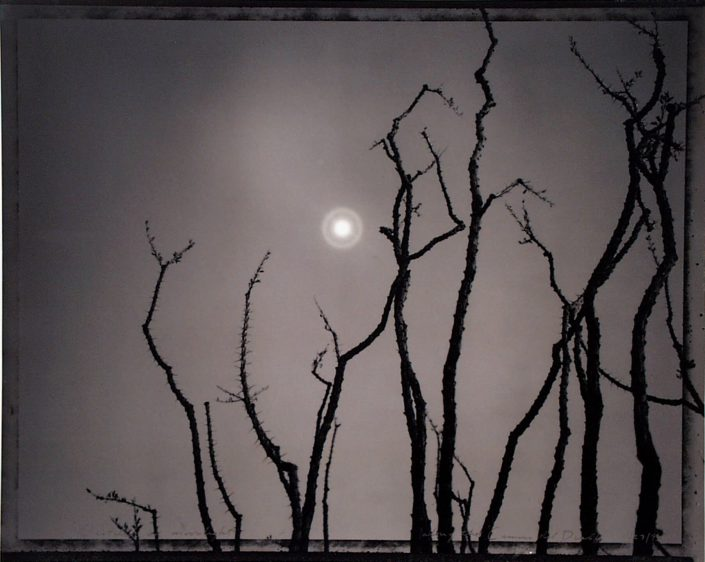 Mark Klett - Ocotillo in Moonlight, along the Camino del Diablo,1993, gelatin silver print, 16 by 20 inches