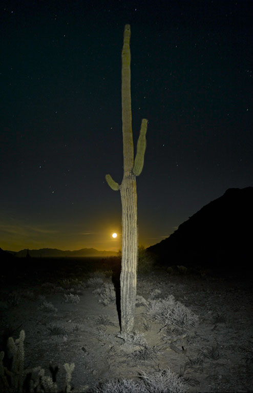 Mark Klett - Saguaro: Lit by Headlamp with Moon, 2016, inkjet print, Available in several sizes: 57 by 43 inches, 46.5 by 35 inches, 30.6 by 23 inches, and 6 by 4 inches