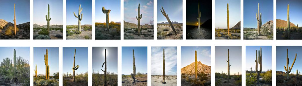 Mark Klett - Set of 20 Saguaro images in metal tin case, 2016, inkjet prints in metal tin, each image measures 6 by 4 inches, edition of 5 sets