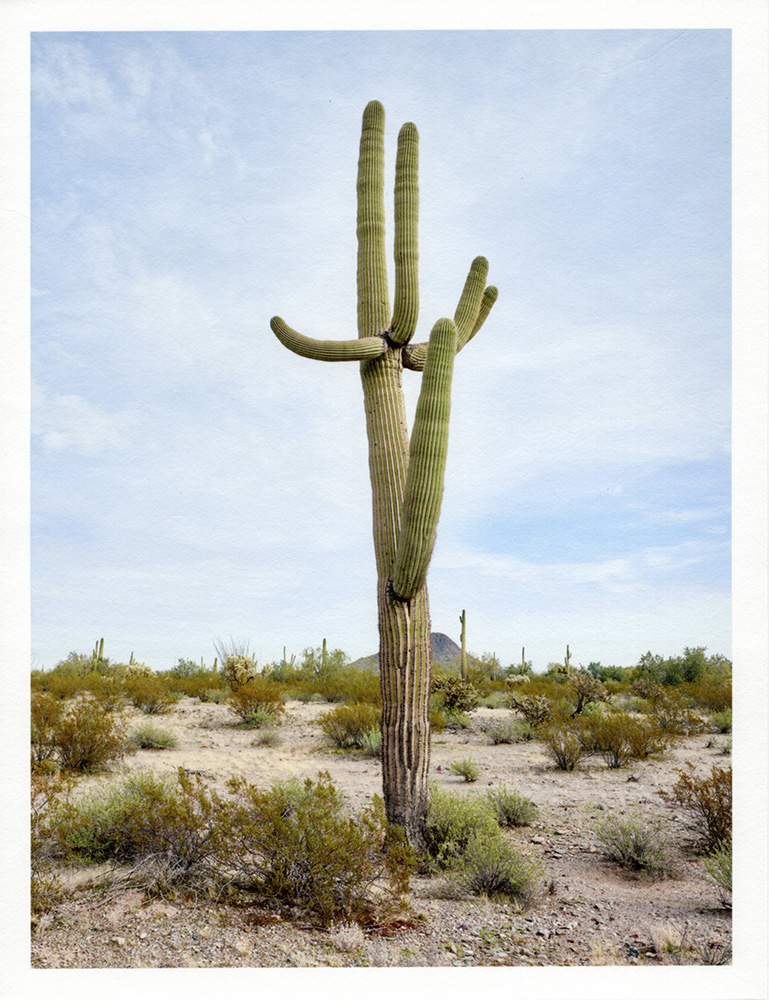 Mark Klett - Color Saguaros (Saguaro w large), 2020, inkjet prints on Japanese tissue paper, 10.75 x 8.25 inches each