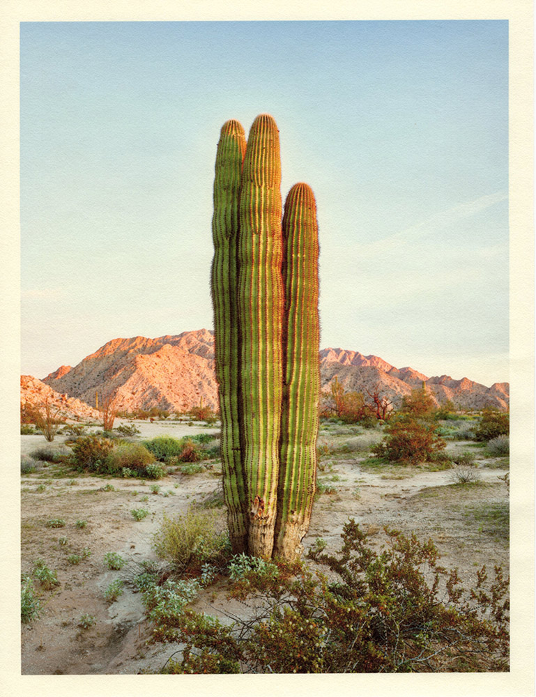 Mark Klett - Color Saguaros (Saguaro cluster of 3), 2020, inkjet prints on Japanese tissue paper, 10.75 x 8.25 inches each