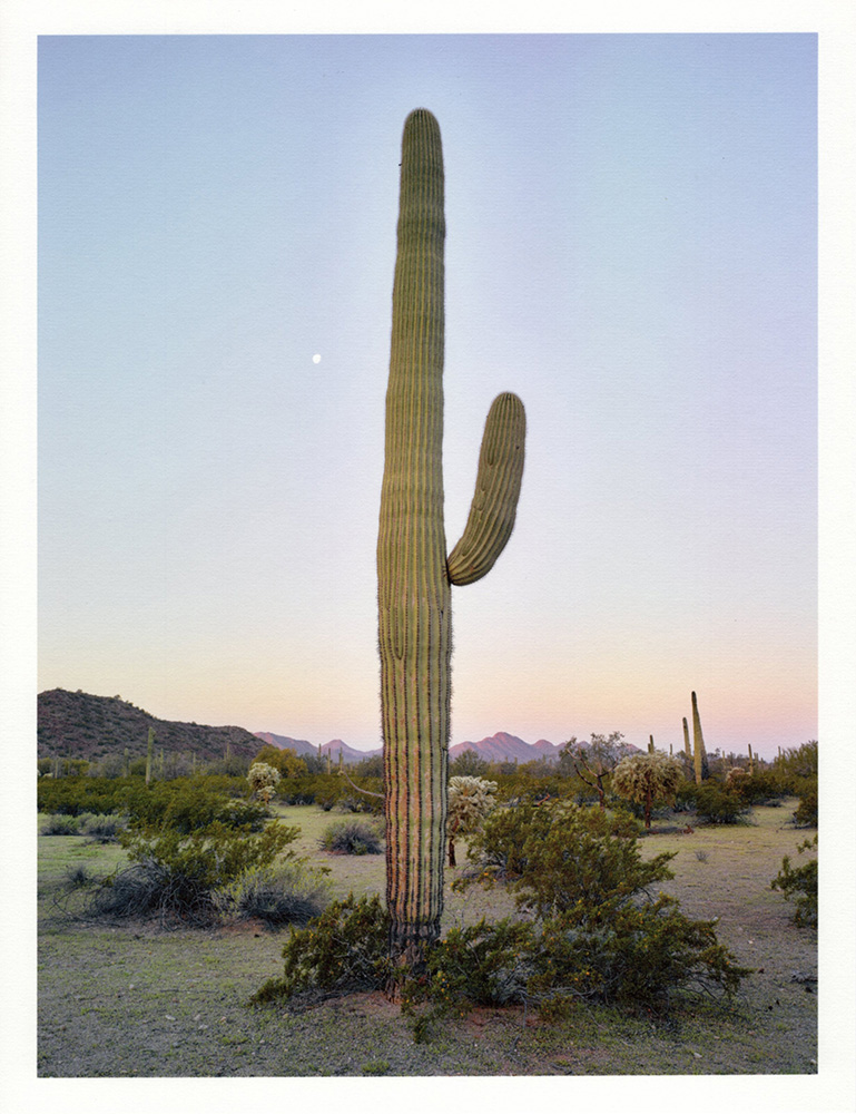 Mark Klett - Color Saguaros (Saguaro dawn terminus moon an 1 arm), 2020, inkjet prints on Japanese tissue paper, 10.75 x 8.25 inches each