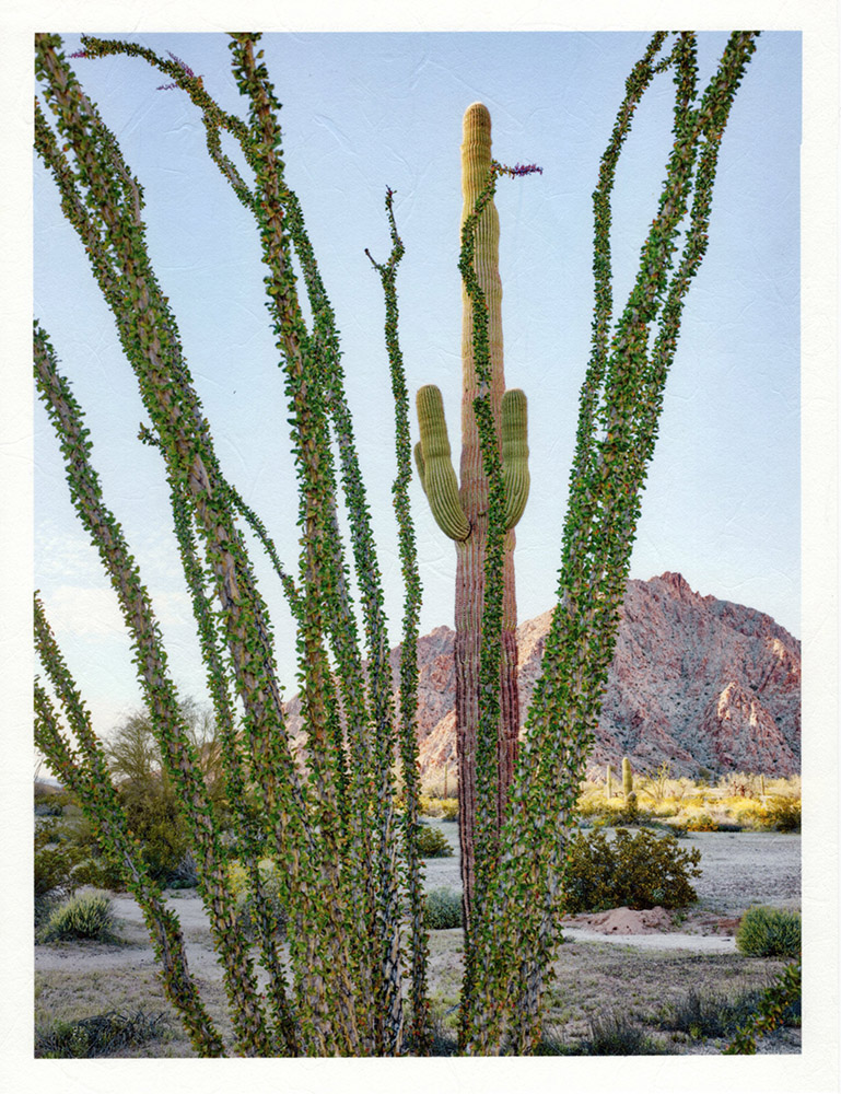 Mark Klett - Color Saguaros (Saguaro behind ocotillo good light), 2020, inkjet prints on Japanese tissue paper, 10.75 x 8.25 inches each