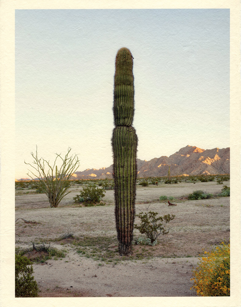 Mark Klett - Color Saguaros (Saguaro in shadow 1 segment), 2020, inkjet prints on Japanese tissue paper, 10.75 x 8.25 inches each
