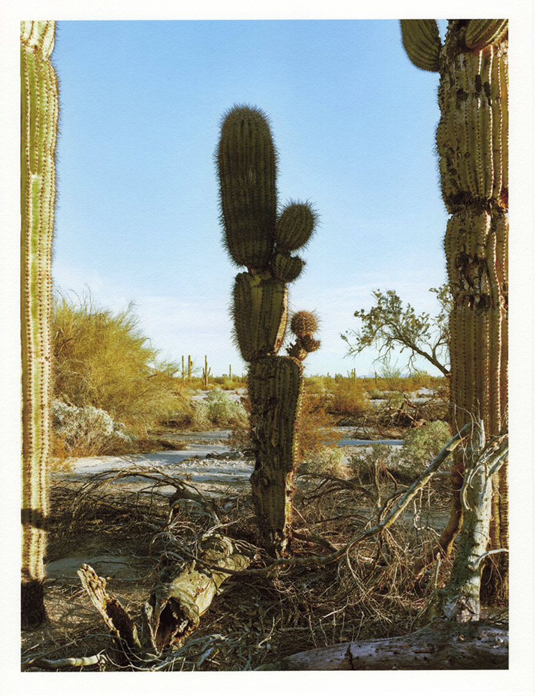 Mark Klett - Color Saguaros (Saguaro blocky between two others 35W), 2020, inkjet prints on Japanese tissue paper, 10.75 x 8.25 inches each