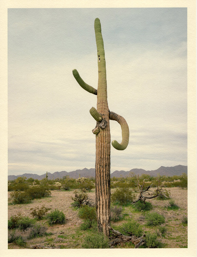 Mark Klett - Color Saguaros (Saguaro 2 arms skyward broken arms), 2020, inkjet prints on Japanese tissue paper, 10.75 x 8.25 inches each