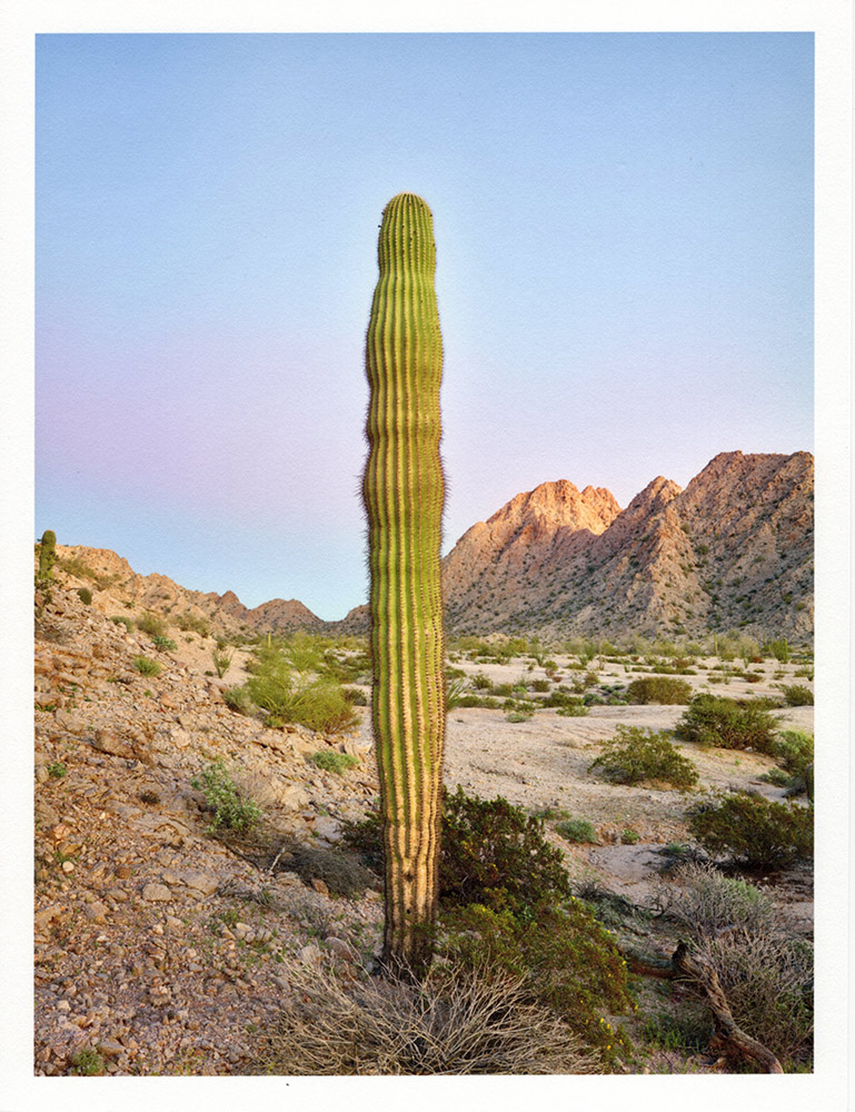 Mark Klett - Color Saguaros (Saguaro like sentinel smugglers pass), 2020, inkjet prints on Japanese tissue paper, 10.75 x 8.25 inches each
