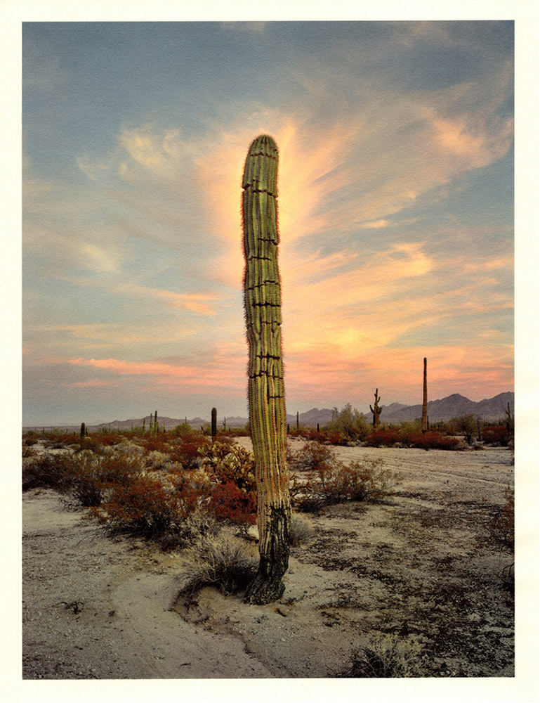 Mark Klett - Color Saguaros (Saguaro w glow at dusk), 2020, inkjet prints on Japanese tissue paper, 10.75 x 8.25 inches each
