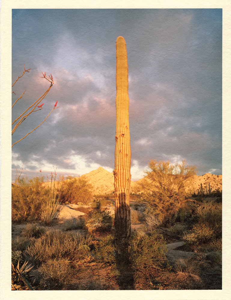 Mark Klett - Color Saguaros (Saguaro w shadow yellow light), 2020, inkjet prints on Japanese tissue paper, 10.75 x 8.25 inches each