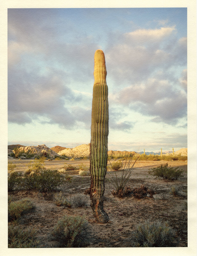 Mark Klett - Color Saguaros (Saguaro top in light scud clouds behind), 2020, inkjet prints on Japanese tissue paper, 10.75 x 8.25 inches each