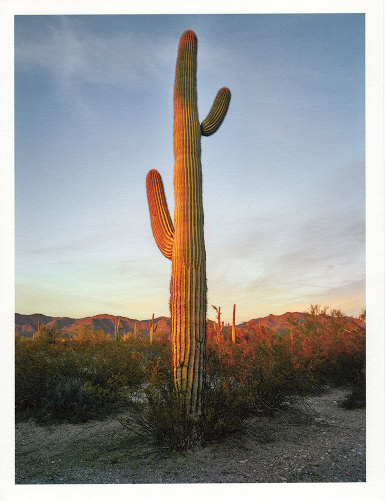 Mark Klett - Color Saguaros (Saguaro 2 arms shadow on side yellow), 2020, inkjet prints on Japanese tissue paper, 10.75 x 8.25 inches each