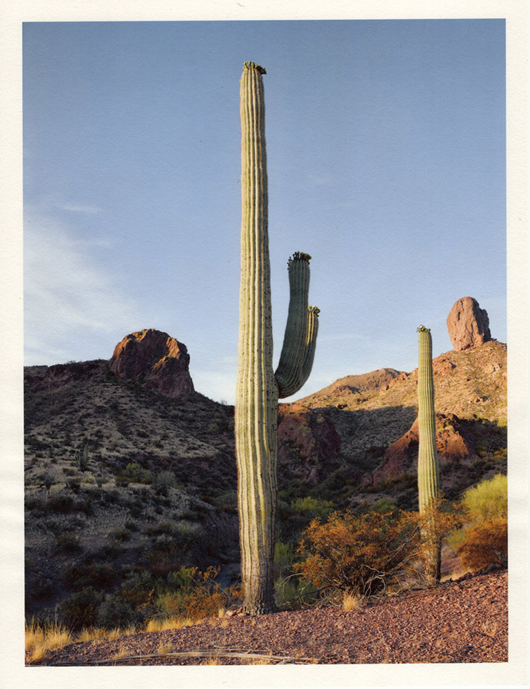 Mark Klett - Color Saguaros (Saguaro in am light 2 arms Toms Thumb May), 2020, inkjet prints on Japanese tissue paper, 10.75 x 8.25 inches each