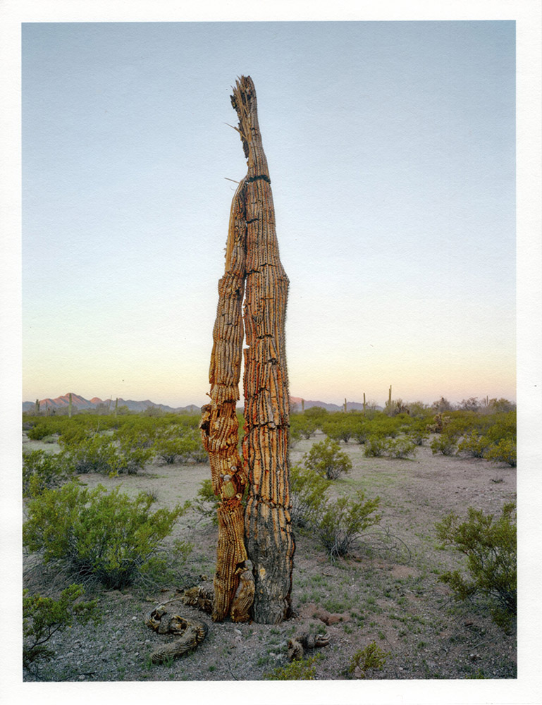 Mark Klett - Color Saguaros (Saguaro dead folded over), 2020, inkjet prints on Japanese tissue paper, 10.75 x 8.25 inches each