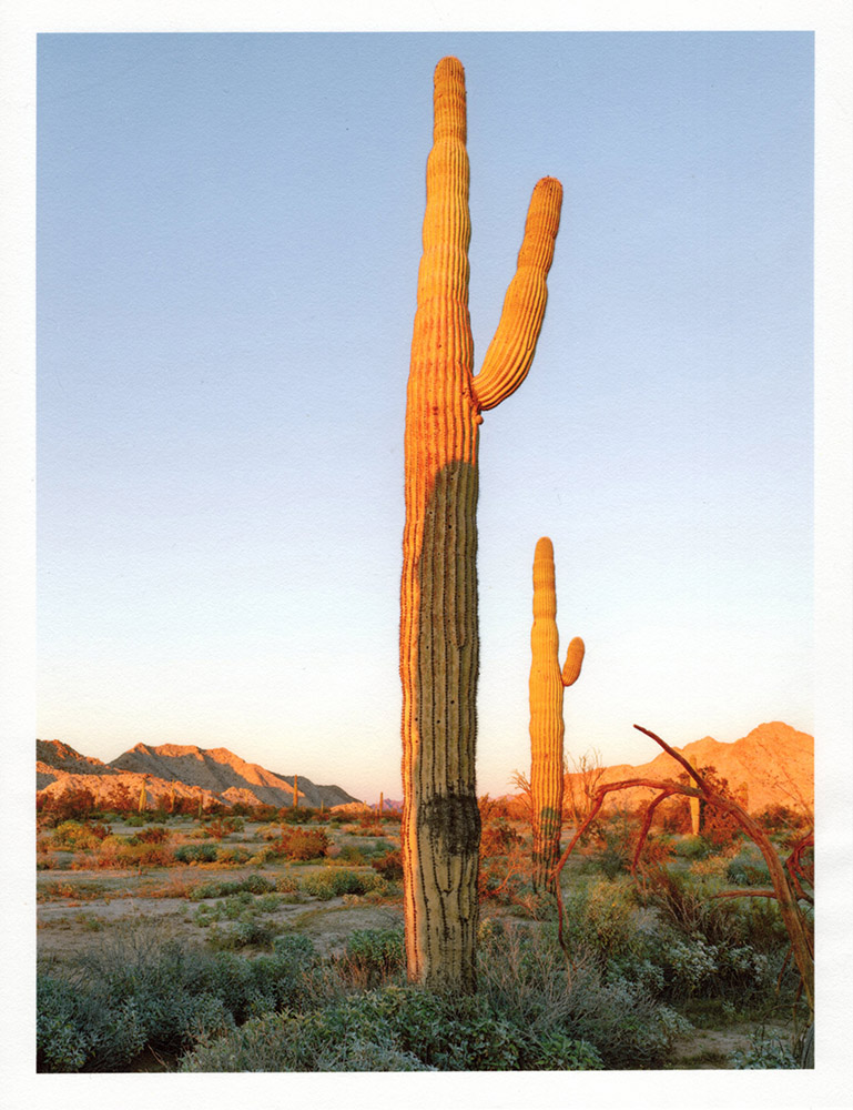 Mark Klett - Color Saguaros (Saguaro at sunset with shadow Cip Pass), 2020, inkjet prints on Japanese tissue paper, 10.75 x 8.25 inches each