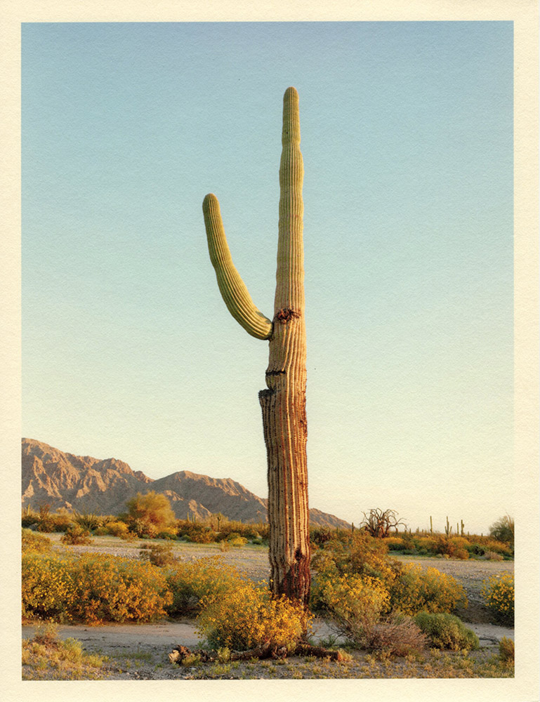Mark Klett - Color Saguaros (Saguaro w long nose and mouth), 2020, inkjet prints on Japanese tissue paper, 10.75 x 8.25 inches each
