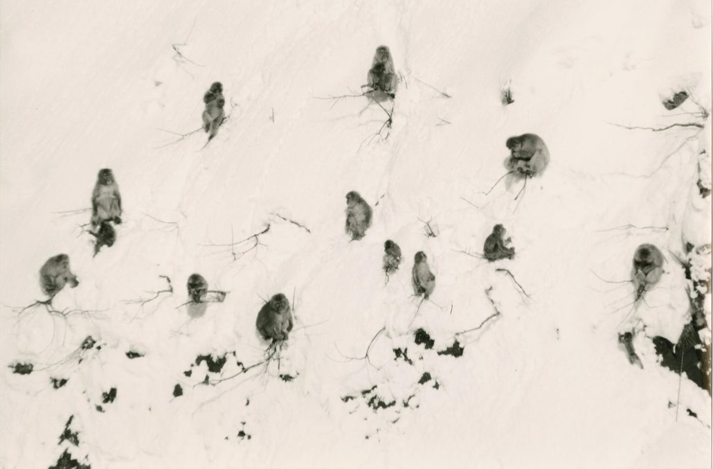 Masao Yamamoto - 1544, from Kawa = Flow, n.d., gelatin silver print with mixed media, 6 by 9 inches