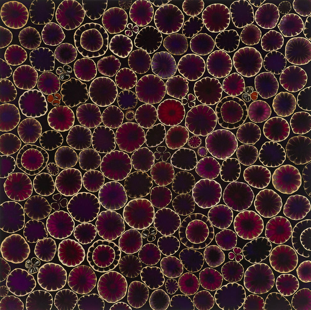 Mayme Kratz - Violet Bloom, 2020, resin, poppy and hesperaloe pods on panel, 18 x 18 inches