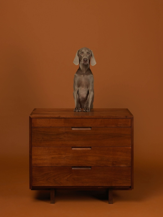 William Wegman - Addressed, 2015, pigment print, 30 by 23 inches or 44 by 34 inches