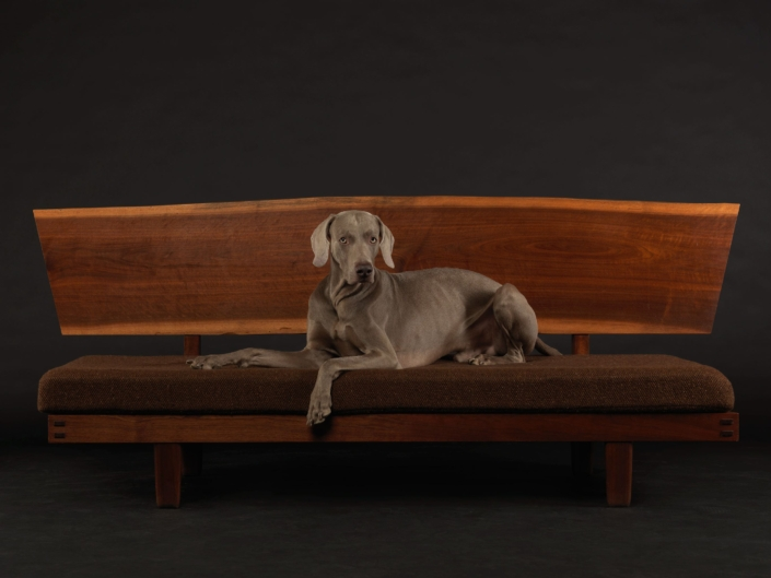William Wegman - Benchmark, 2015, pigment print, 23 by 30 inches