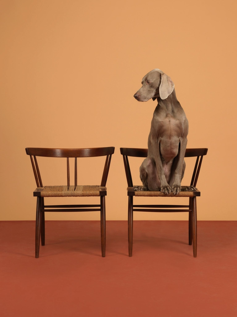 William Wegman - One On, 2015, pigment print, 30 by 23 inches or 44 by 34 inches