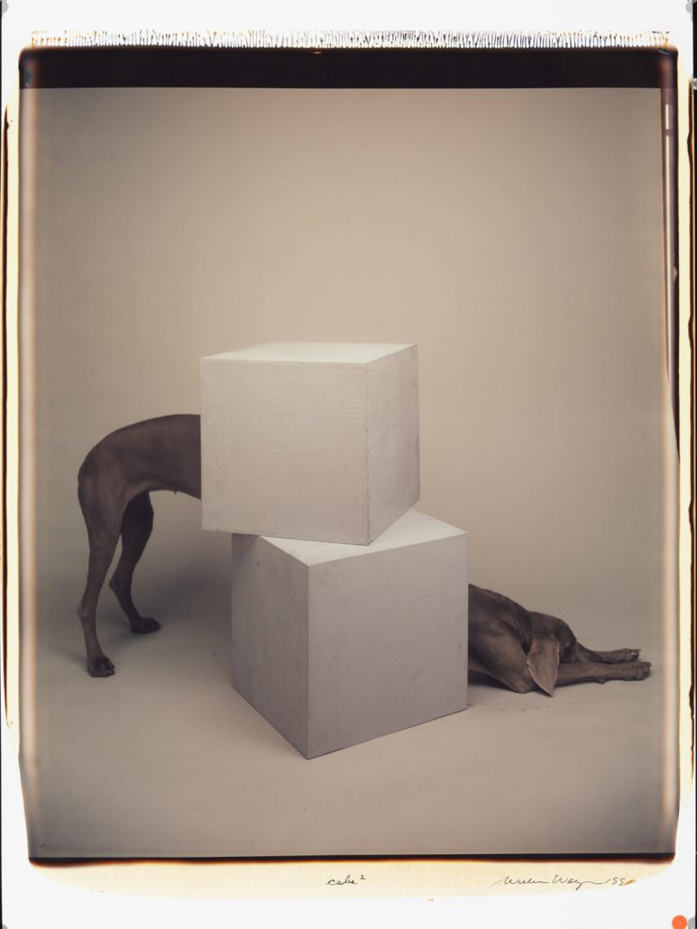 William Wegman - Cube Squared, 1992, color polaroid, 24 by 20 inches