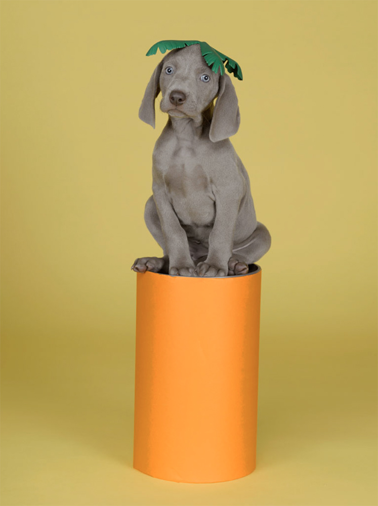 William Wegman - Abstract Carrot, 2007, pigment print, 14 by 11 inches