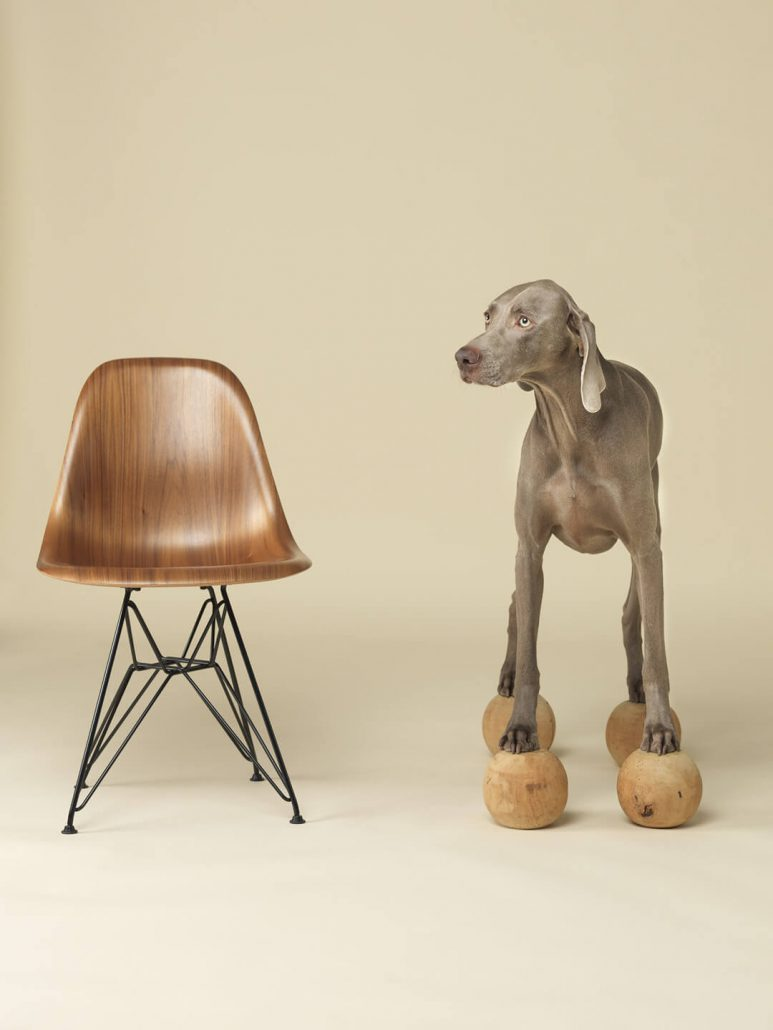 William Wegman - Basic Wood, 2015, pigment print, 30 x 24 inches or 44 x 34 inches