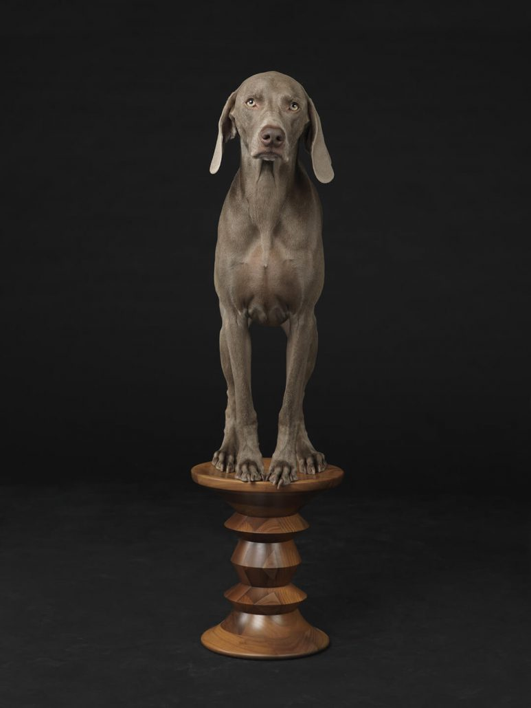 William Wegman - Figured Base, 2015, pigment print, 30 by 24 inches or 44 by 34 inches