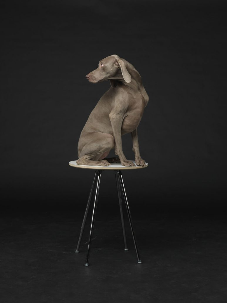 William Wegman - Lit from Within, 2015, pigment print, 30 by 24 inches or 44 by 34 inches