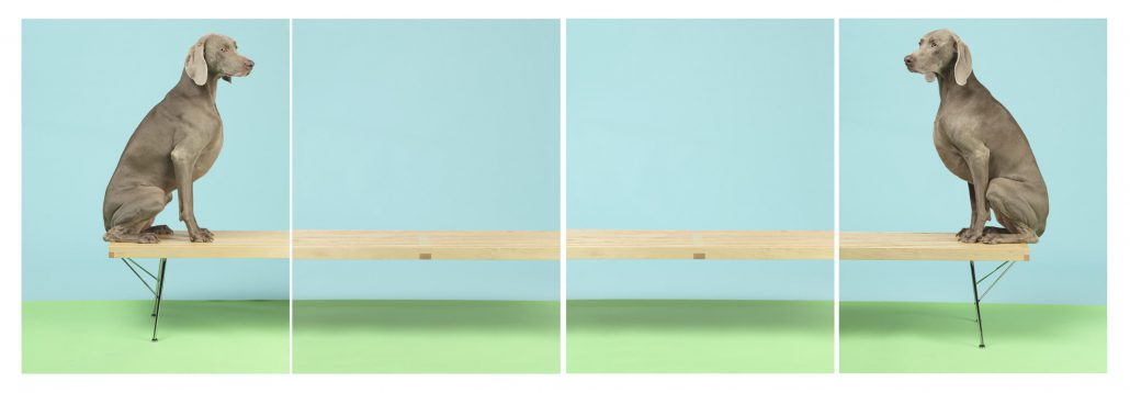 William Wegman - On and On, 2015, pigment print, four panels each measuring 30 by 24 inches or four panels each measuring 44 by 34 inches