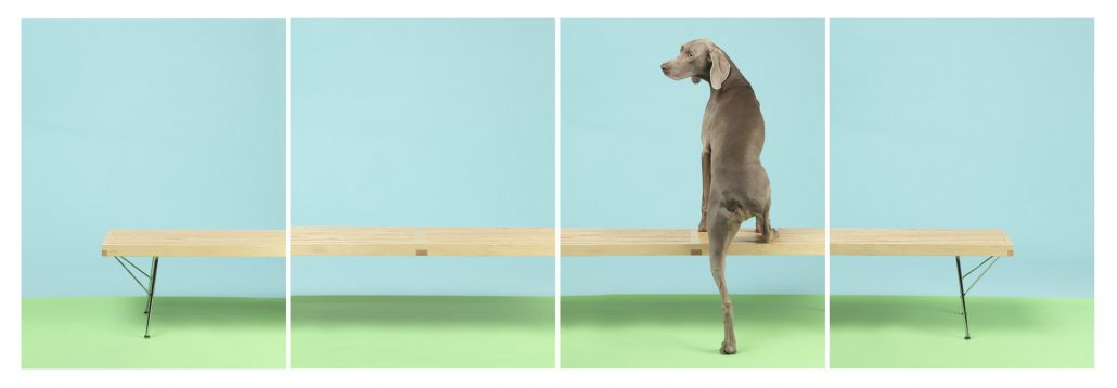 William Wegman - On Up, 2015, pigment print, four panels each measuring 30 by 24 inches or four panels each measuring 44 by 34 inches