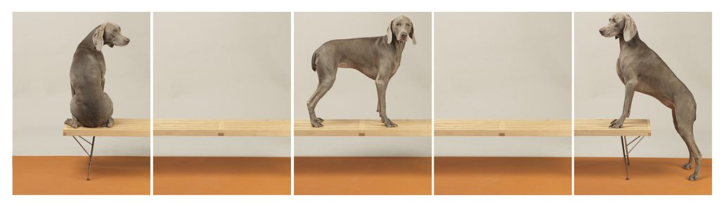 William Wegman - On Up and Over, 2015, pigment print, five panels each measuring 30 by 24 inches or five panels each measuring 44 by 34 inches