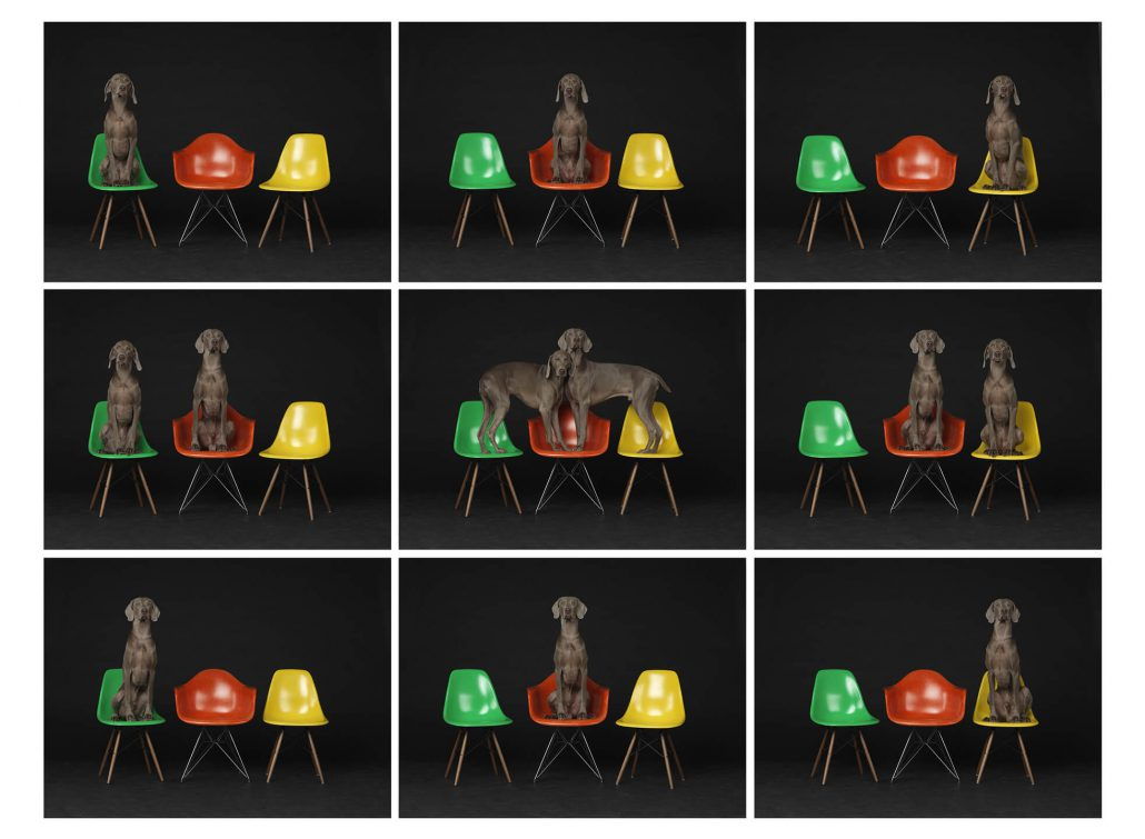 William Wegman - One, Two, Three, etc., 2015, pigment print, 44 by 57.25 inches or nine prints each measuring 20 by 26.5 inches