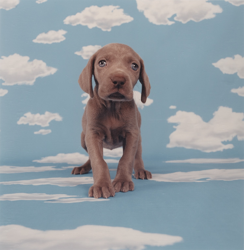 William Wegman - Partly Cloudy, 2001, chromogenic print, 14 by 11 inches