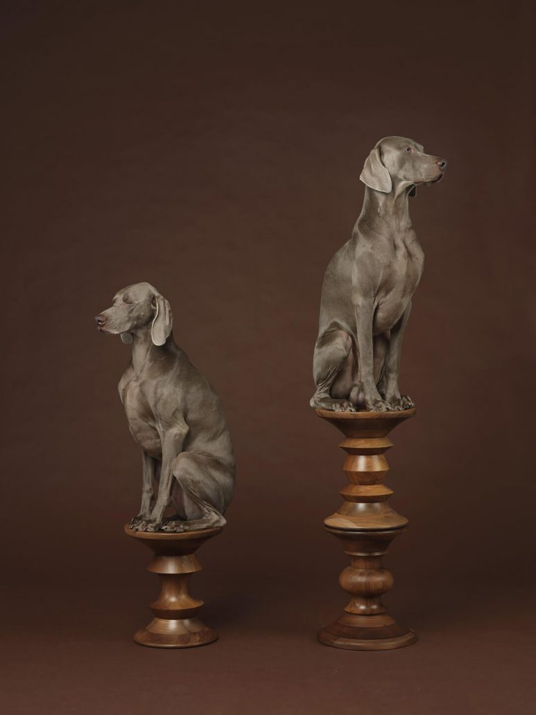 William Wegman - Pawns, 2015, pigment print, 30 by 24 inches or 44 by 34 inches